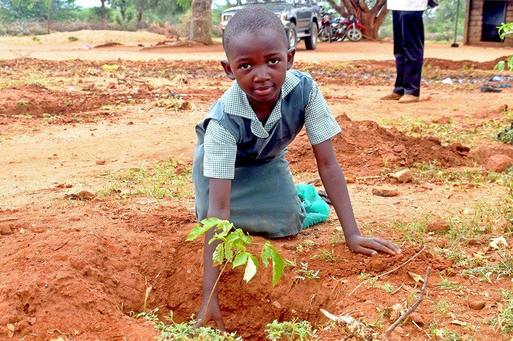 Kenialainen lapsi istuttaa puuntaimen.